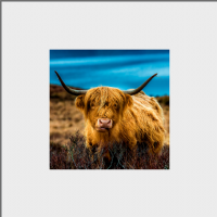 Highland Cow Mounted Print AS_31_MM